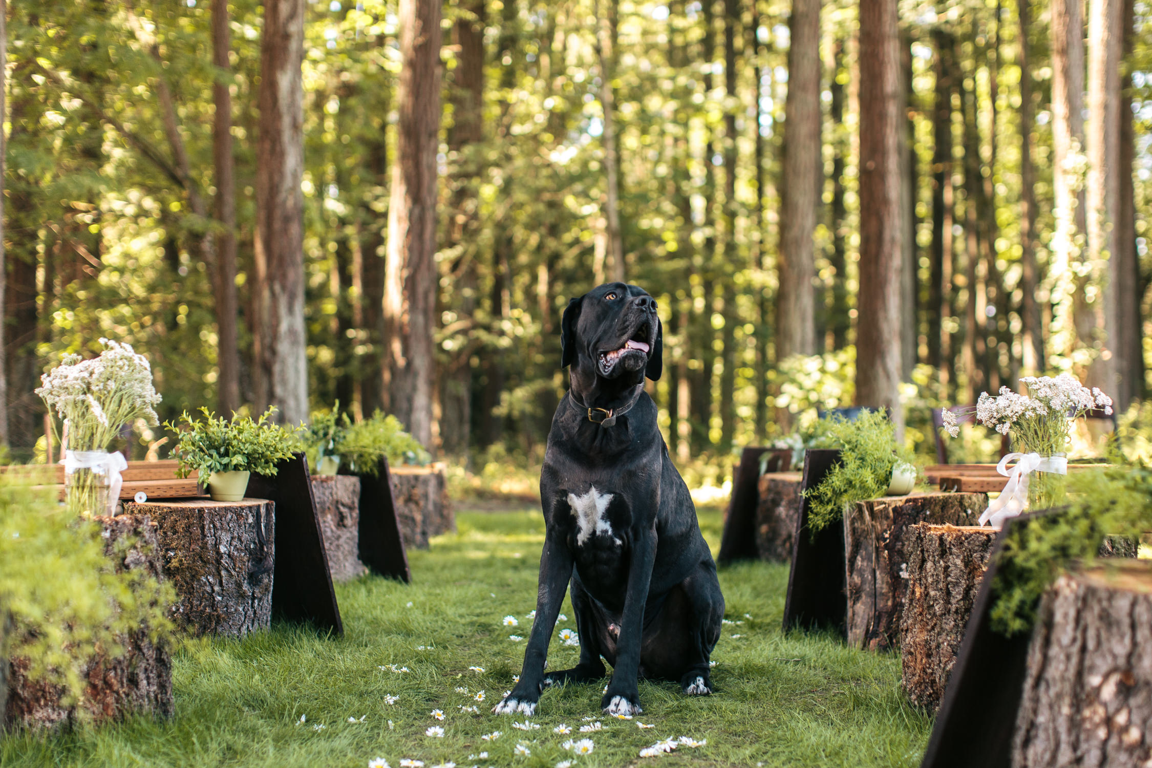 Sherwood Backyard Wedding Portland Oregon Dog